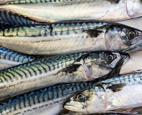 Mackerel catch advice for 2019