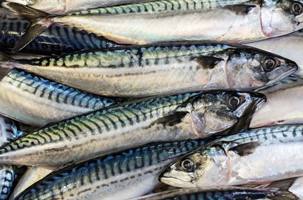 Disappointment over MSC mackerel suspension
