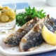 Scottish North Sea herring